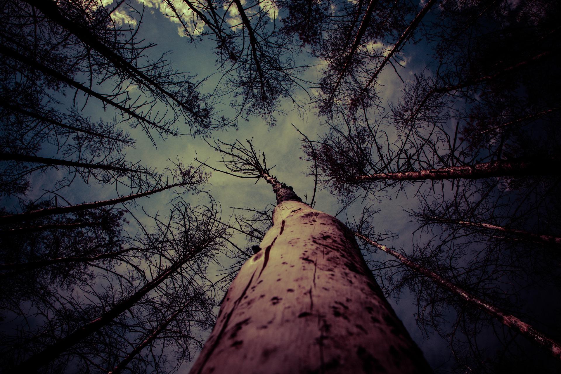 trees-5688625_1920
